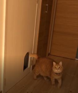 にゃんこドア