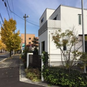 モデルハウス前銀杏並木