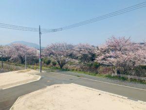 下松市楠木町分譲地桜並木