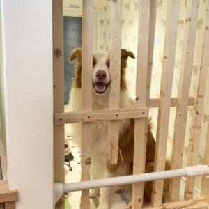 愛犬と共に暮らす家(愛犬)